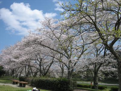 花見☆宮リバー公園