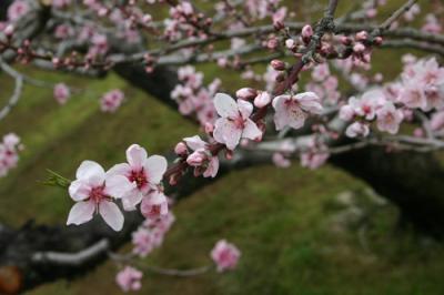 甲斐路の春を行く【1】~釈迦堂遺跡と甲州軍団出陣~