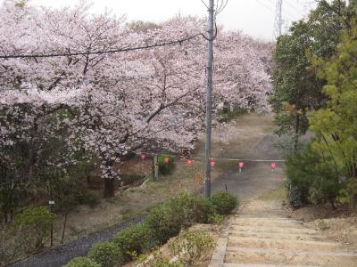 近所でお花見2007