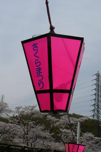 摂津峡公園(通称桜公園)の花見?