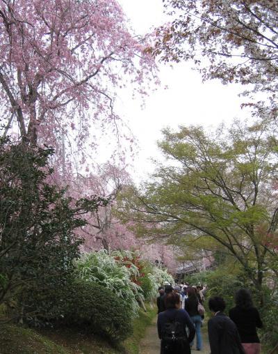 京都の桜 2007 その3  原谷苑−桜のシャワー−、桜の平野神社