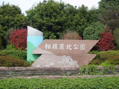 07年4月15日 新緑の公園&スーパー銭湯でリフレッシ♪