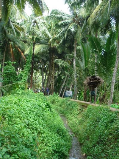 Discovering Kerala