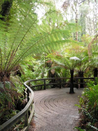 ビクトリア州(西部)・グレートオーシャンロード・温帯雨林でウォーキング