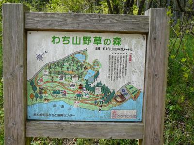 京丹波町散策:わち山野草の森?