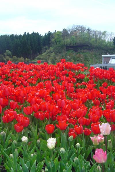 昭和の日の「国営越後丘陵公園」