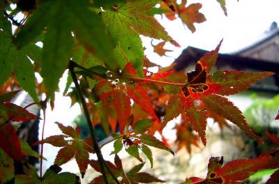 夕刻の静かな秋★2006【奈良】
