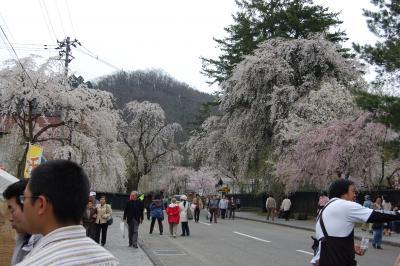 角館の桜@北東北の旅