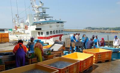 勝浦魚港に次々と鰹船が入港しています。