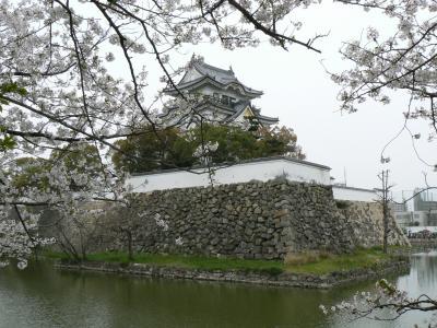 だんじりの街、岸和田城の桜