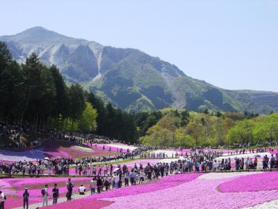 GW前半、秩父芝桜と野趣溢れる鈴加園の石器焼料理