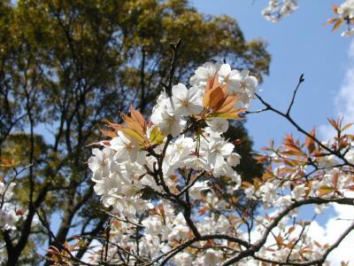 横須賀~衣笠山と塚山公園