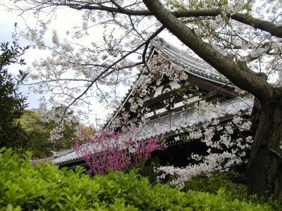 称名寺の桜景色