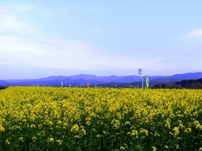 2007春 下北半島(恐山・横浜町)