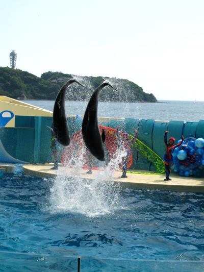新江ノ島水族館を探訪 ☆イルカの跳躍・イワシの群泳に感動!