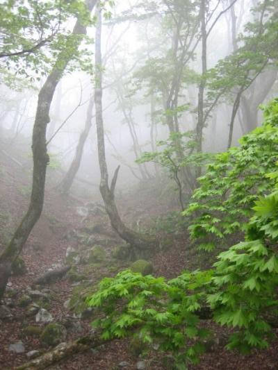 悪天候で引き返し 鈴鹿の山