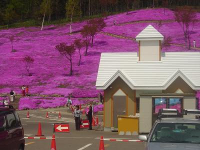 北海道のもう一つの桜