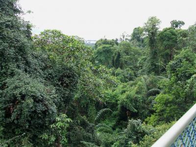 シンガポール(ジャングル10km歩くの旅)