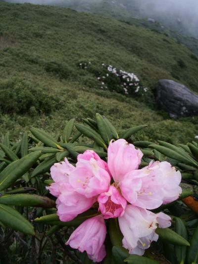 屋久島宮之浦岳登山の旅