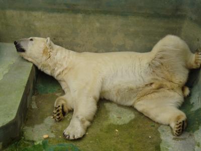 ハリコフの動物園