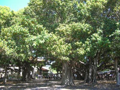 ハワイ 4島クルーズ 3日目 マウイ島~ラハイナ・カアナパリ