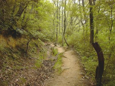 生駒山ハイキング