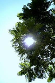太陽にほえレナイ@カイロ