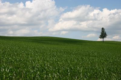 勢いだけで北海道へ【2】~湿原を渡る風と美しき丘~
