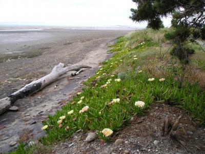 カラメア:NZ南島西海岸北端、辺境の町(改訂)