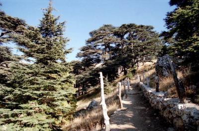 02秋 レバノン/レバノン杉とその周辺