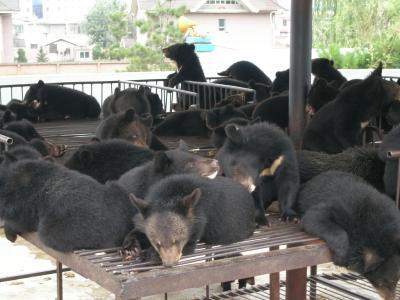 延吉 熊牧場、旧大宇ホテルに出かける