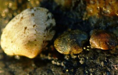不法投棄現場北海岸生物調査07年8月26日