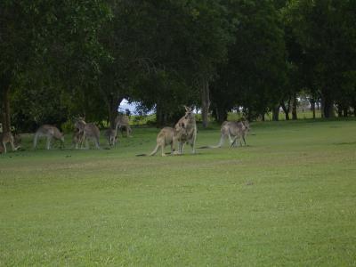 オーストラリア旅行記1 ケアンズ、動物ツアー