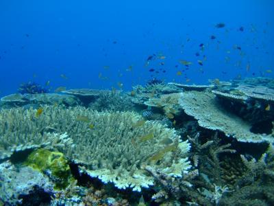 ツラギ島はダイビングパラダイス