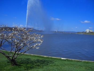 07オーストラリア周遊の旅(Canberra Day Tours)