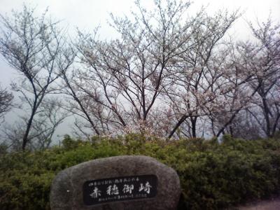 07.04.07兵庫県桜レポート?赤穂御崎・赤穂城跡