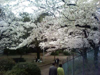 07.04.08桜レポート 再び池田の五月山