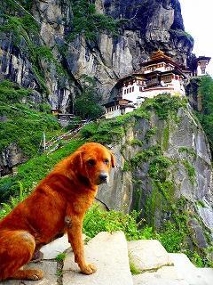 ブータンの犬@パロ