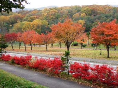 2007-10 「ドウダンツツジ」の紅葉と、遺跡発掘現場!