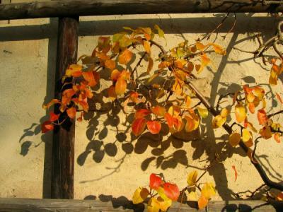 黄金の秋 ベー弁這う全