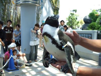八景島にあざらしの赤ちゃんを観に行ったよ!