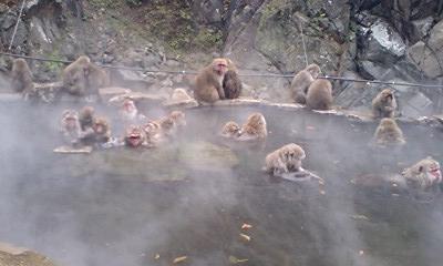 湯田中・渋温泉 猿と戯れたかった1泊2日