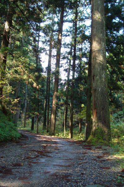 「慈光寺の杉並木」と「黄金の里」を歩く <新潟県五泉市村松地区>