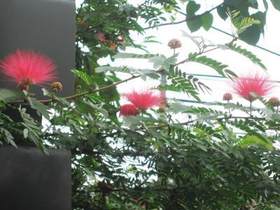 2007秋、フィリピン旅行記1(17):11月1日(1)マニラ・ココナッツ・パレス