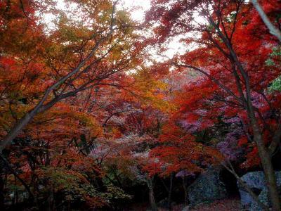 小嵐山・東山公園の紅葉