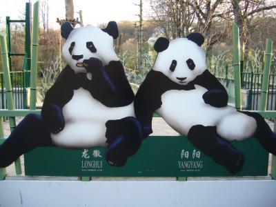 wien panda