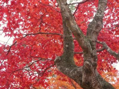 西播磨紅葉めぐり その1 最上山「もみじ山」