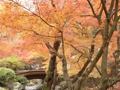 西播磨紅葉めぐり その2 東山公園