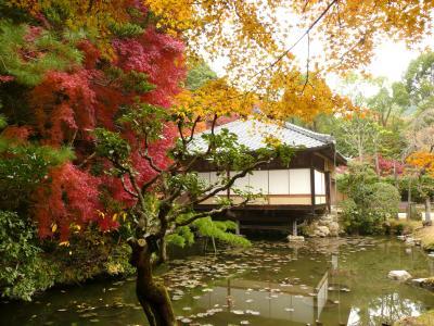 西播磨紅葉めぐり その3 龍野公園