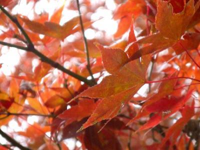 ジブリ美術館&井の頭恩賜公園 2007秋 秋色の雑木林